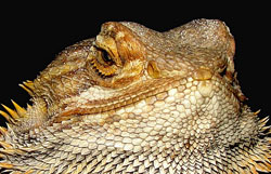 reptile care sheets